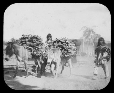 Native American men with donkeys loaded with wood.