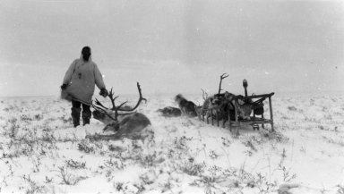 Kogmukwith caribou collect for group