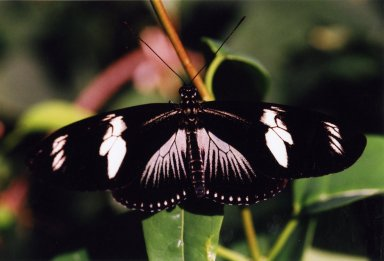 Close up of black and white butterfly