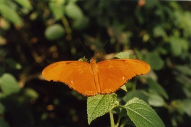 Close up of orange butterfly on green leaves