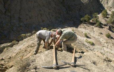 L-R: Dr. Ian Miller, DMNS Volunteer David Allen (obscured), and DMNS Volunteer Dane Miller(foreground), struggle to remove a large rock specimen.