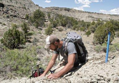 Dr. Joseph Sertich, DMNS Curator of Vertebrate Paleontology, carefully unearths a specimen.