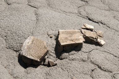 Pieces of recently excavated turtle shell are displayed on the harsh Kaiparowits soil.