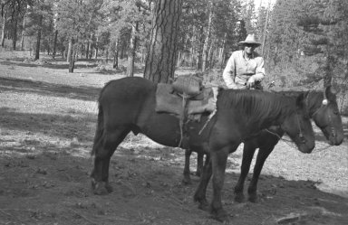 Man with 2 horses