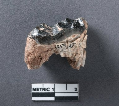 Eotitanops mandible rotated view