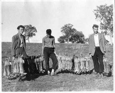 Men with many dead rabbits