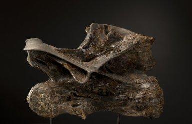 Diplodocus longus