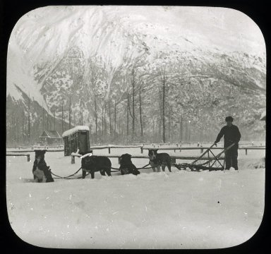 Unidentified man with dog sled