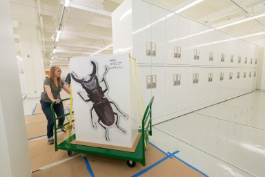 Museum interior - Zoology Collections move to Avenir Collection Center