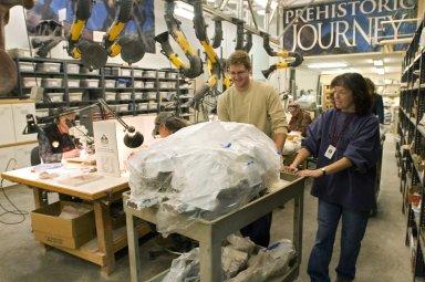 Moving Mastodon Skull