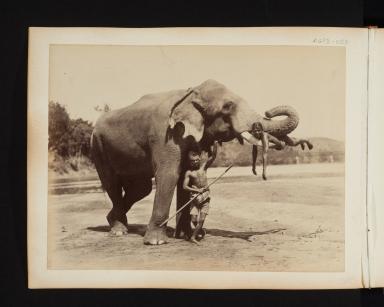 Elephant handlers with Asian Elephant in Sri Lanka.