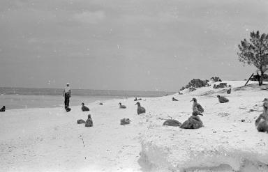 Fieldwork on Midway Island