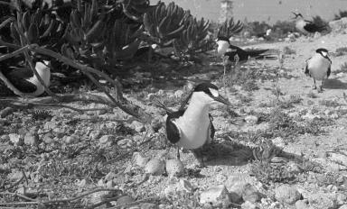 Fieldwork on Midway Islands