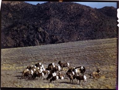 Alfred M. Bailey fieldwork in Colorado