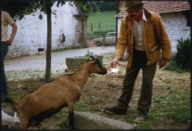 Goat asking for a cigarette