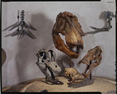 Dinosaur fossils at Prehistoric Journey Exhibit