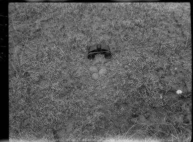 Mountain plover nest