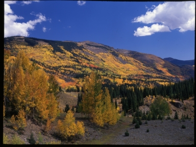 Fall colors in Conejos County