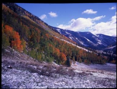 Mineral Basin