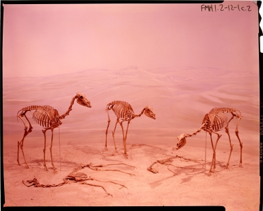 Old Fossil Mammal Hall Exhibit