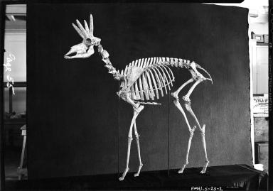 Old Fossil Mammal Hall