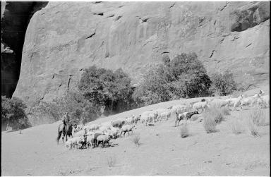 Navajo male shepherd