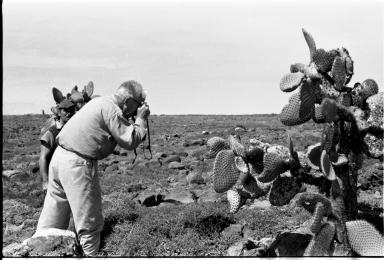 Photographing Galapagos Iguana