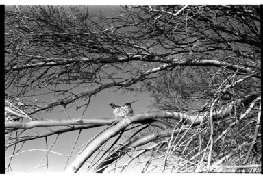 Hummingbird and nest