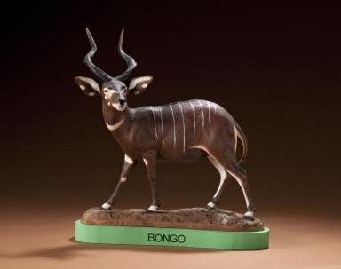Bongo aka Greater Kudu
