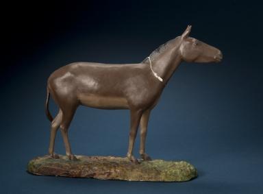 Horse Neohipparion