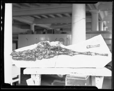 Fossil Turtle Flipper