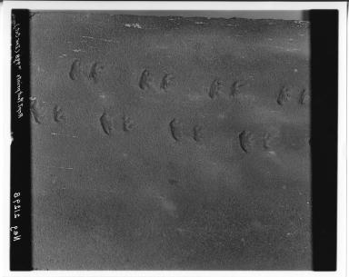 Reptile footprints in sandstone