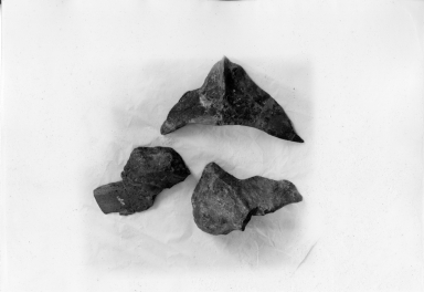 Plesiosaurus bone