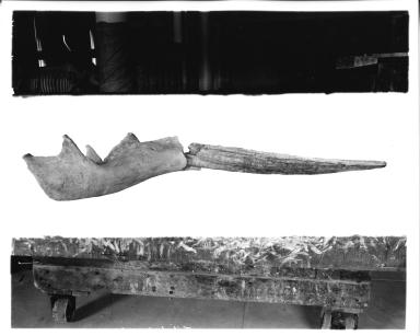 Trilophodon paladentatus mandible