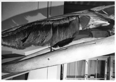 Fin Whale Articulation Move