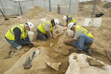 Thornton Torosaurus Excavation