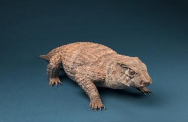 Model of Simosuchus clarki shull