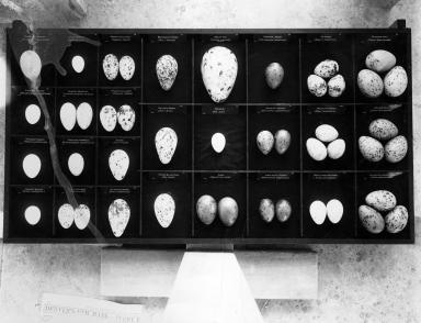 Bradberry egg collection