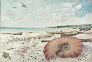Ancient Wyoming- Ammonite Surprise