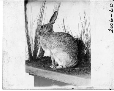 Rabbit Exhibit