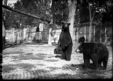 Black bears at the Zoo