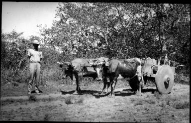Man and ox cart