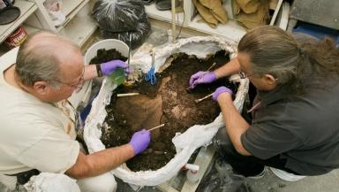 Cleaning Juvenile Mastadon in Paleo Lab from Snomastadon Excavation