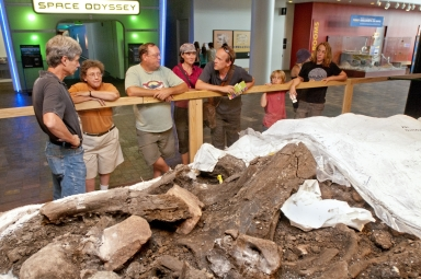 Mammoth  from Snomastadon Excavation in Pop-up Exhibit