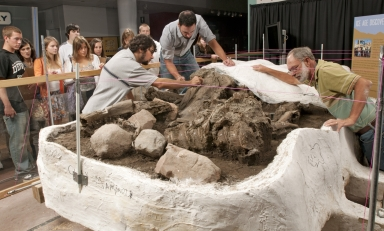 Working on Mammoth  from Snomastadon Excavation in Pop-up Exhibit