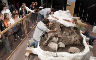 Working on Clay Mammoth from Snomastadon Excavation