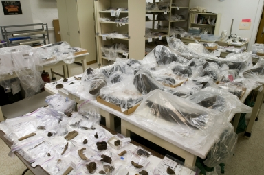 Snomass Fossil Material  from Snomastadon Excavation in Conservation Lab