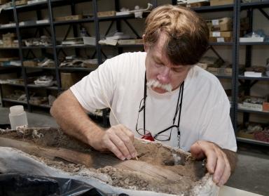 Repairing Mastodon Tusk from Snomastadon Excavation in Paleo Lab