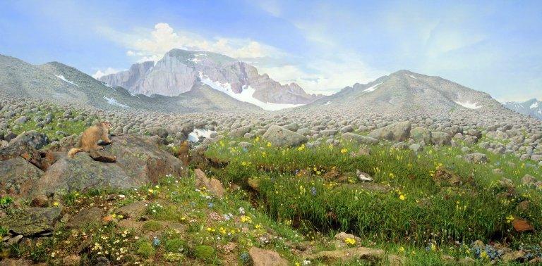 Alpine Tundra Diorama