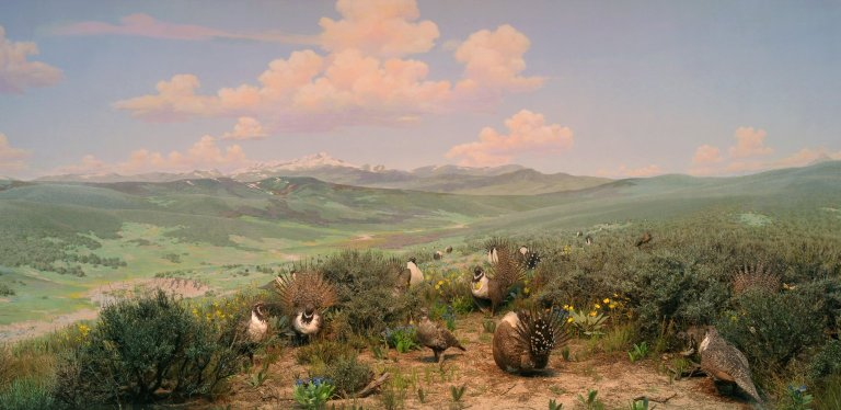 Sage Grouse Diorama